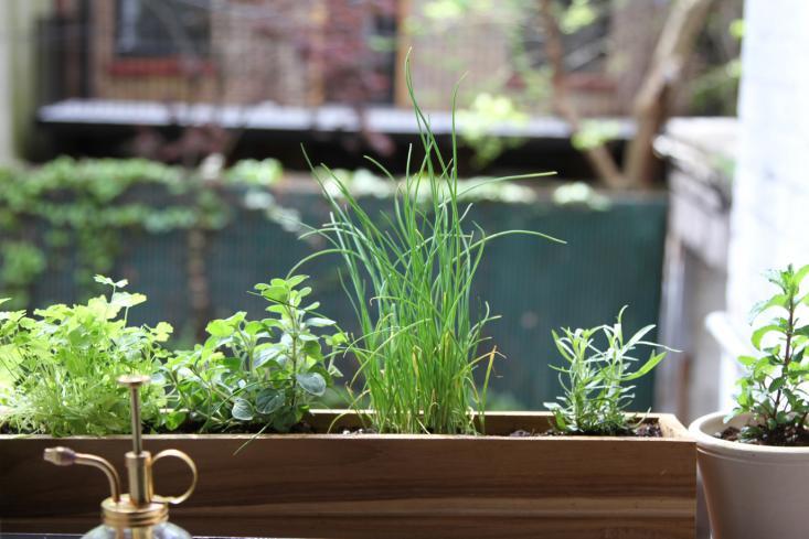 herbs on a city windowsill