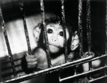 animal-testing-cage (1)